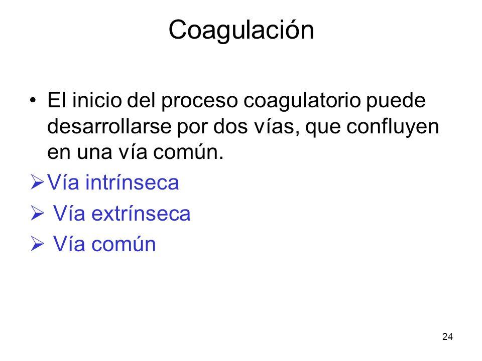 24 Coagulación El inicio del proceso coagulatorio puede desarrollarse por dos vías, que confluyen en una vía común. Vía intrínseca Vía extrínseca Vía