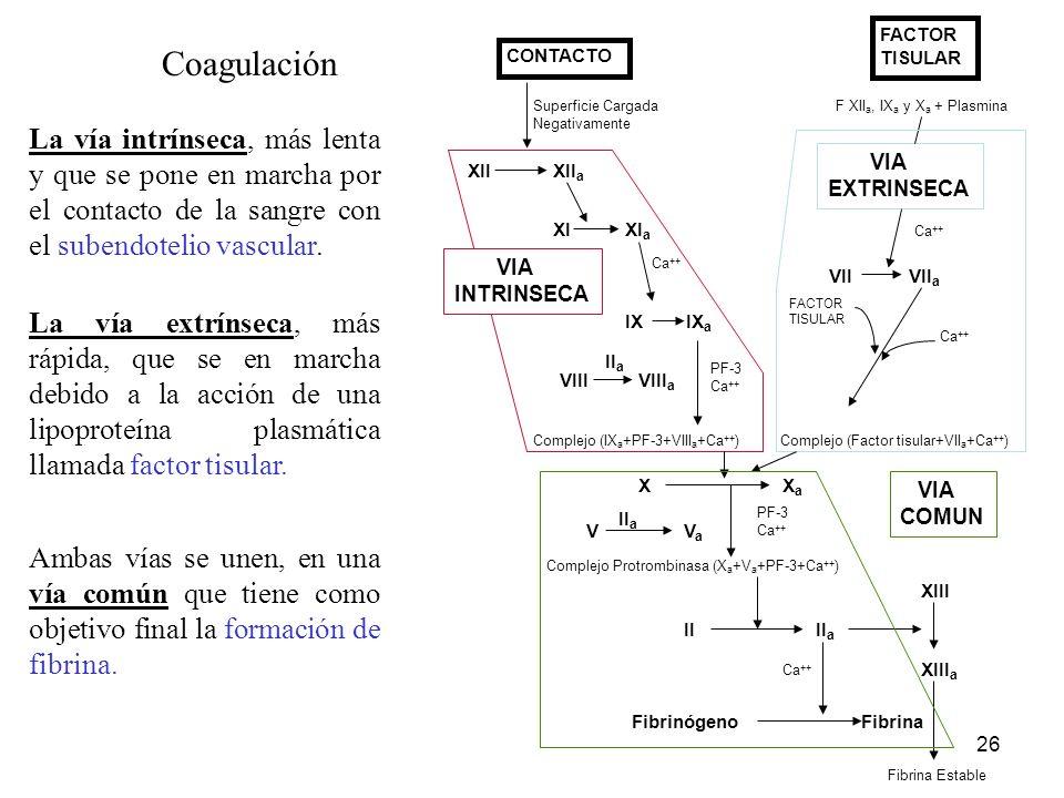 26 Coagulación CONTACTO Superficie Cargada Negativamente IX IX a XIIXII a XI XI a Ca ++ VIIIVIII a II a PF-3 Ca ++ Complejo (IX a +PF-3+VIII a +Ca ++