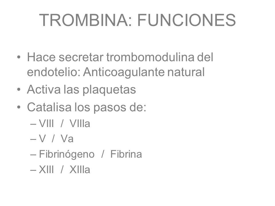 TROMBINA: FUNCIONES Hace secretar trombomodulina del endotelio: Anticoagulante natural Activa las plaquetas Catalisa los pasos de: –VIII / VIIIa –V /