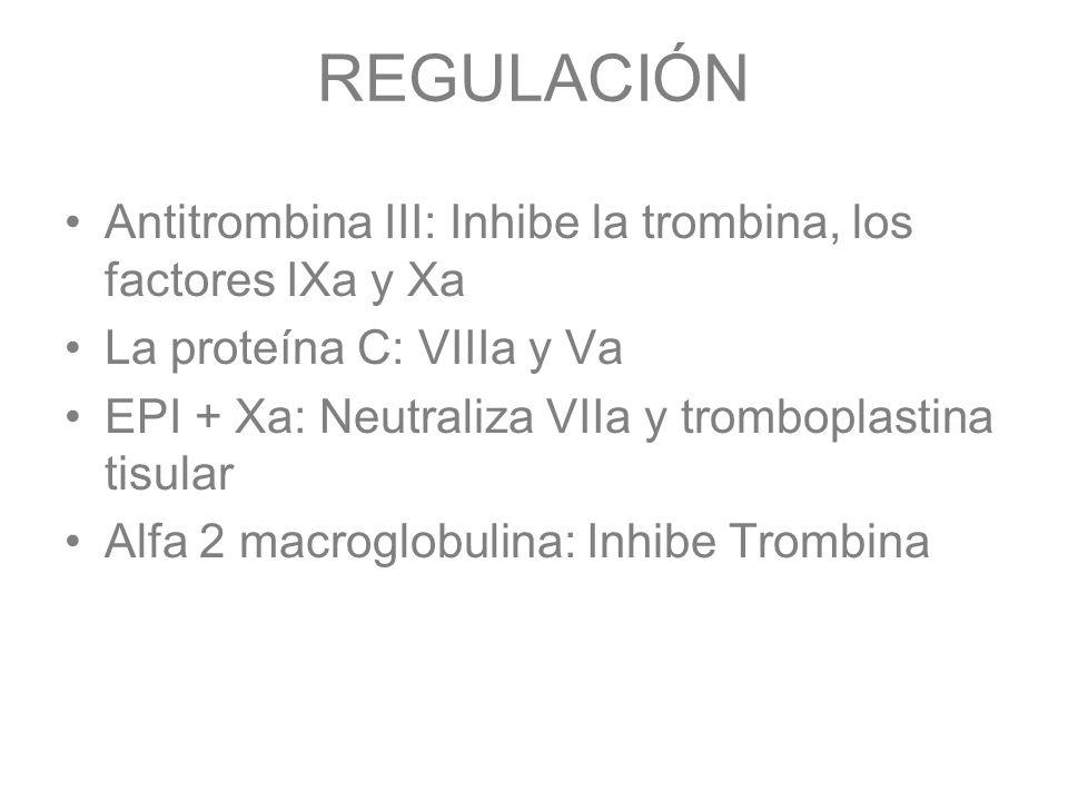 REGULACIÓN Antitrombina III: Inhibe la trombina, los factores IXa y Xa La proteína C: VIIIa y Va EPI + Xa: Neutraliza VIIa y tromboplastina tisular Al