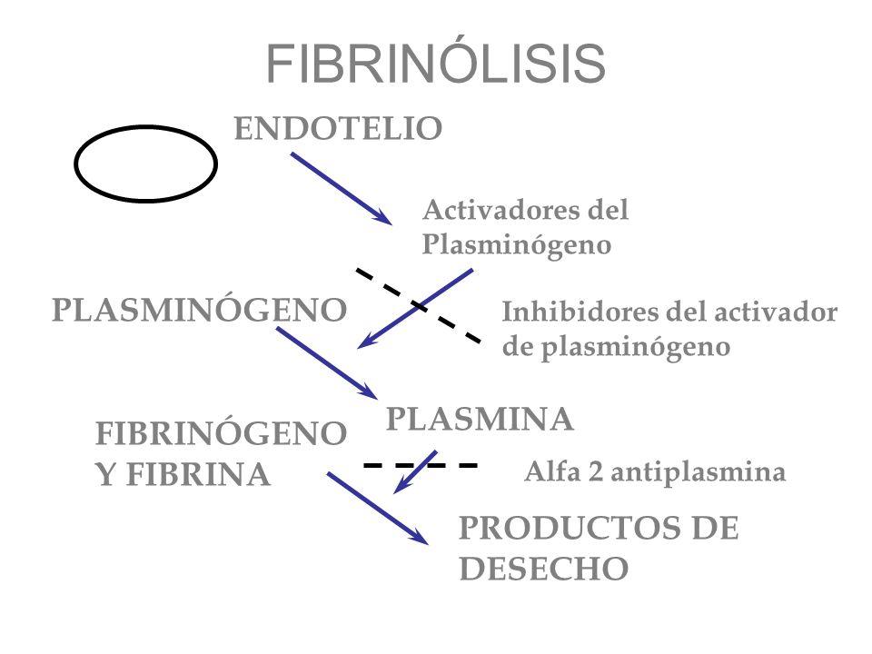FIBRINÓLISIS Activadores del Plasminógeno PLASMINÓGENO PLASMINA FIBRINÓGENO Y FIBRINA PRODUCTOS DE DESECHO ENDOTELIO Inhibidores del activador de plas