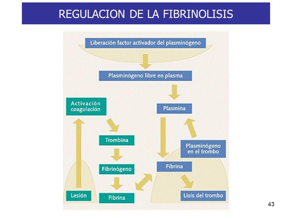 43 REGULACION DE LA FIBRINOLISIS