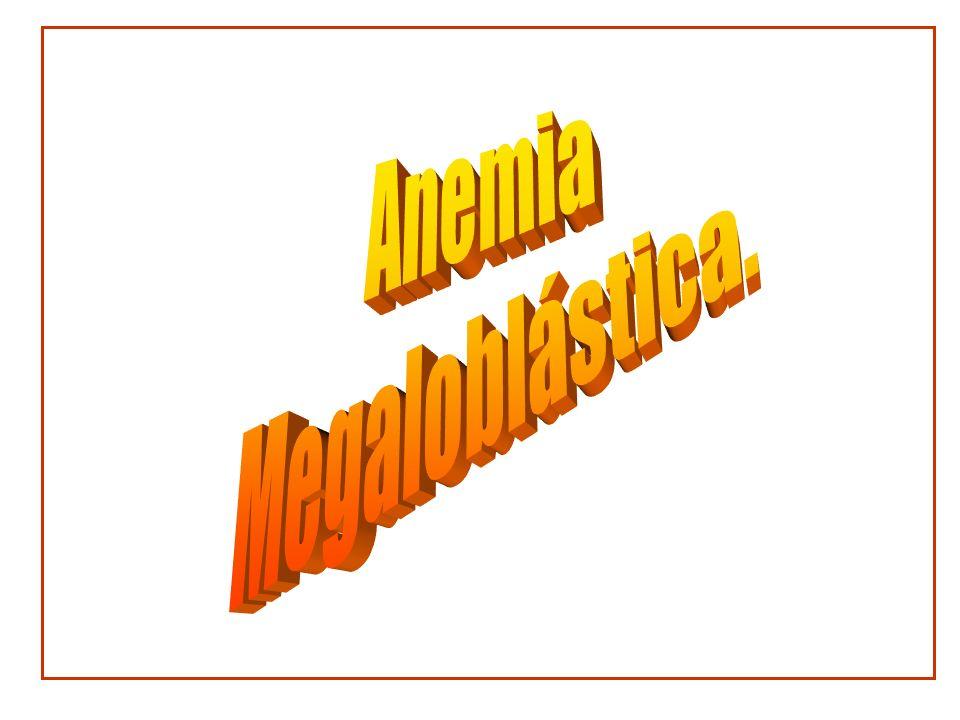 Anemia megaloblástica Las anemias megaloblásticas son anemias debidas a una alteración en la síntesis del ácido desoxirribonucleico (DNA) Las células se dividen lentamente pero el desarrollo del citoplasma es normal por lo que las células son grandes.