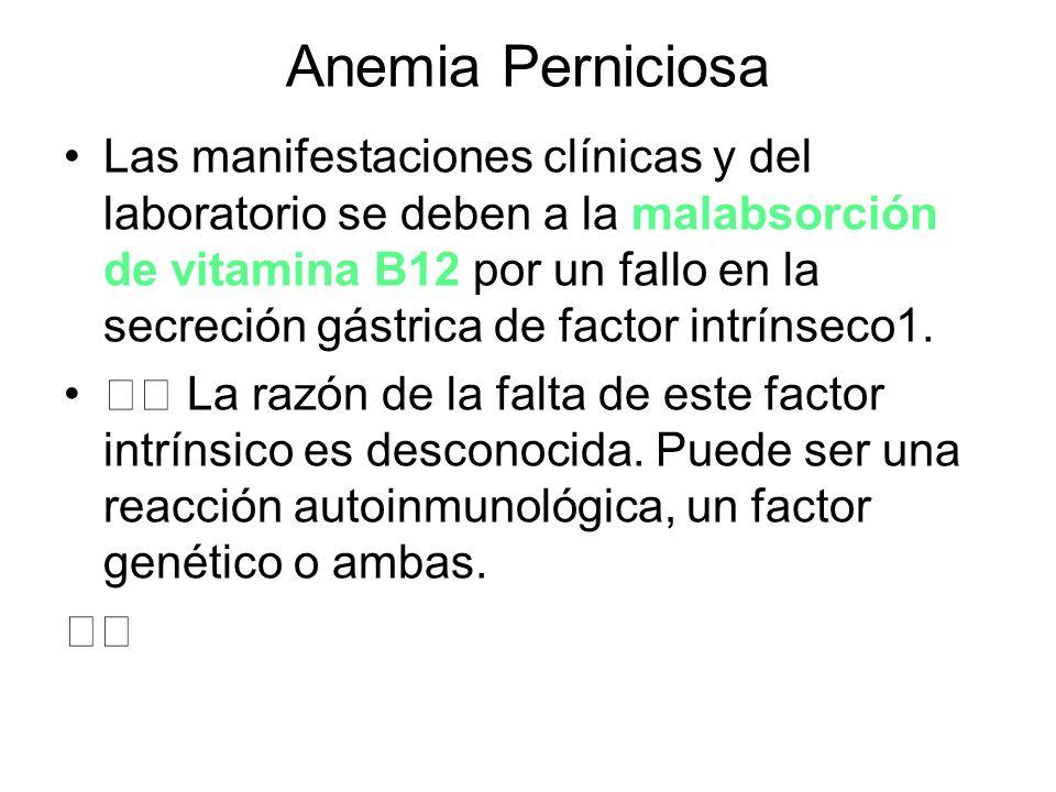 Anemia Perniciosa Las manifestaciones clínicas y del laboratorio se deben a la malabsorción de vitamina B12 por un fallo en la secreción gástrica de f