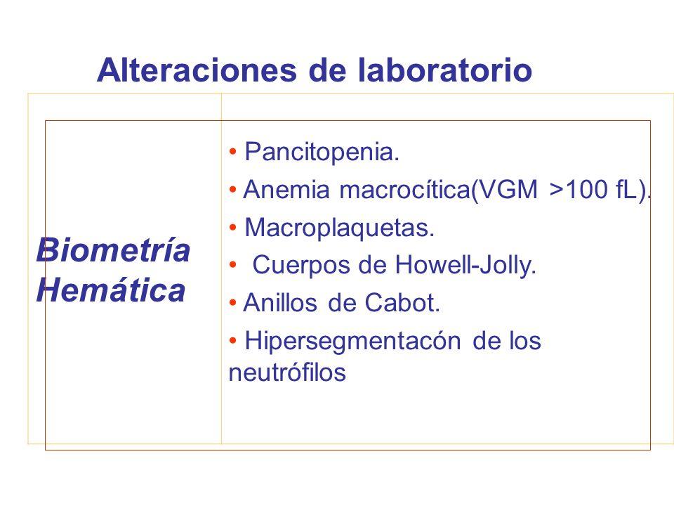 Biometría Hemática Pancitopenia. Anemia macrocítica(VGM >100 fL). Macroplaquetas. Cuerpos de Howell-Jolly. Anillos de Cabot. Hipersegmentacón de los n