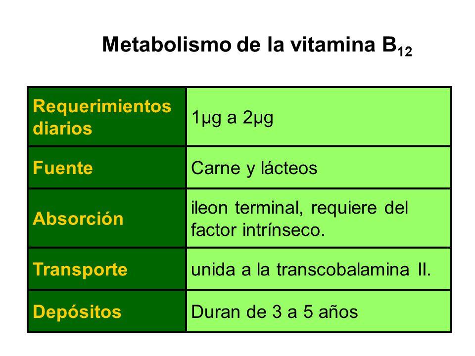 Absorción de la vitamina B12 En presencia de ácido clorhídrico en el estómago, la vitamina B12 unida a los alimentos se desdobla.