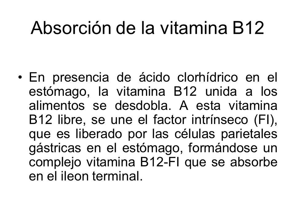 Absorción de la vitamina B12 En presencia de ácido clorhídrico en el estómago, la vitamina B12 unida a los alimentos se desdobla. A esta vitamina B12