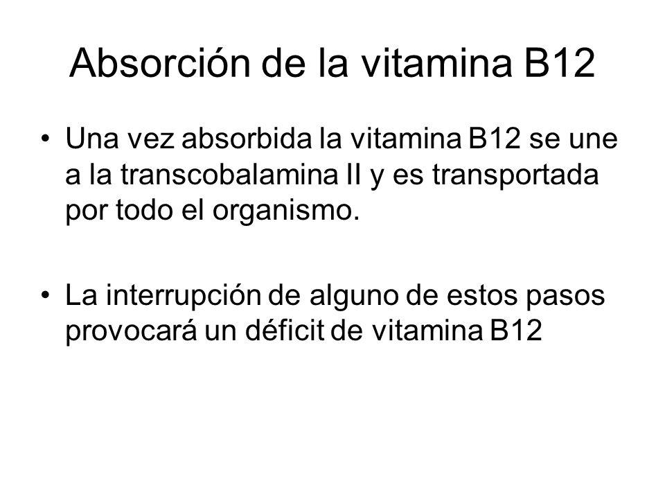 Absorción de la vitamina B12 Una vez absorbida la vitamina B12 se une a la transcobalamina II y es transportada por todo el organismo. La interrupción