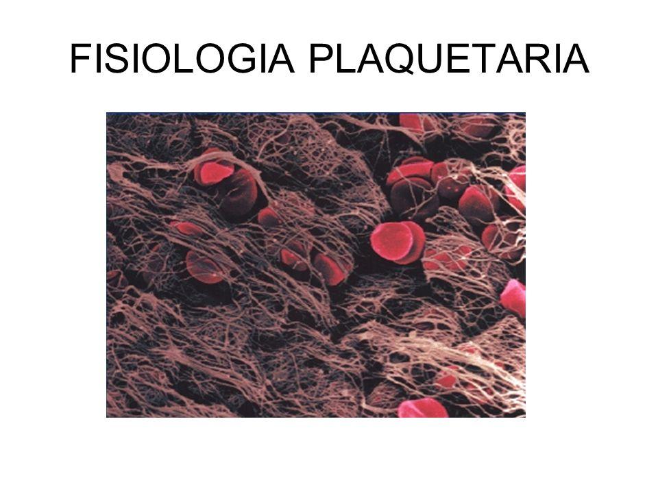 FISIOLOGIA PLAQUETARIA Ana Hernando