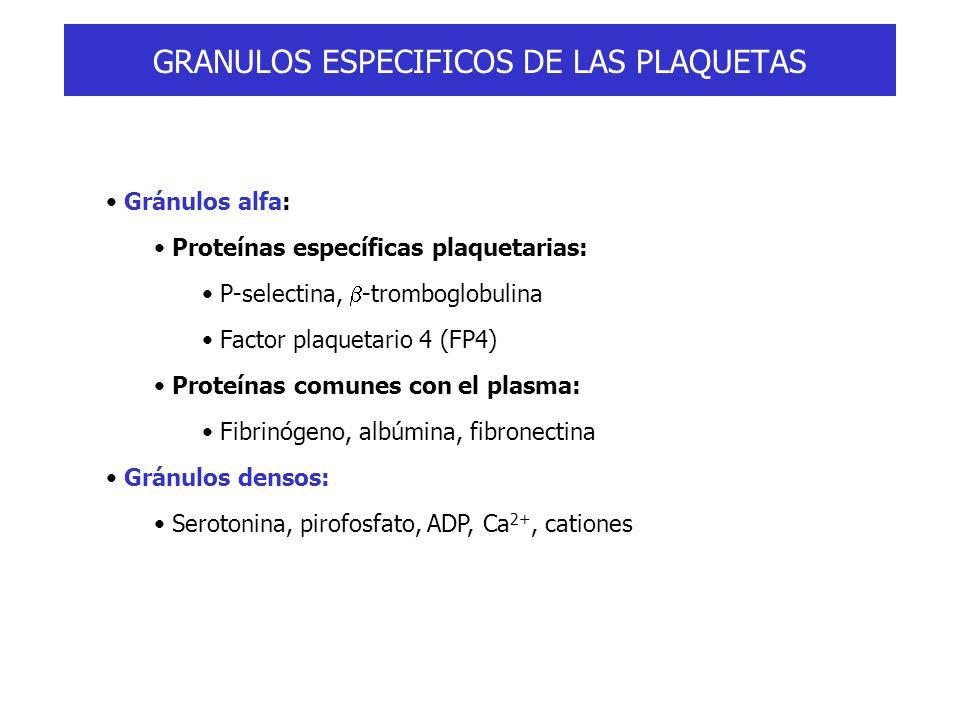 GRANULOS ESPECIFICOS DE LAS PLAQUETAS Gránulos alfa: Proteínas específicas plaquetarias: P-selectina, -tromboglobulina Factor plaquetario 4 (FP4) Prot