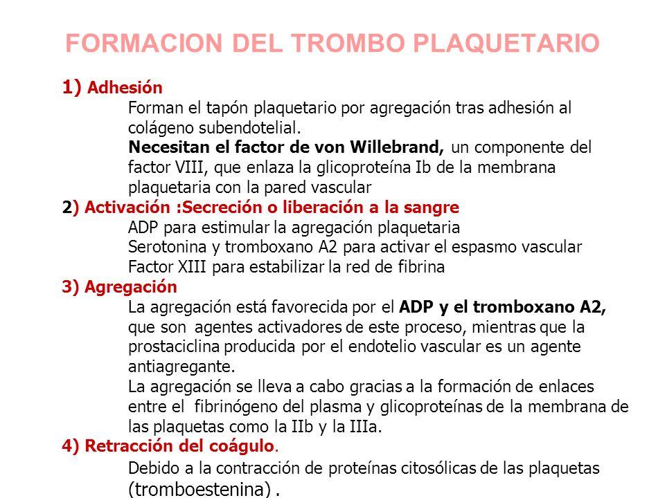 1) Adhesión Forman el tapón plaquetario por agregación tras adhesión al colágeno subendotelial. Necesitan el factor de von Willebrand, un componente d
