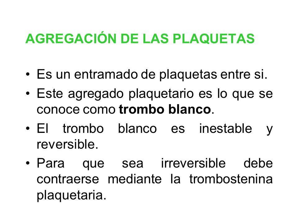 AGREGACIÓN DE LAS PLAQUETAS Es un entramado de plaquetas entre si. Este agregado plaquetario es lo que se conoce como trombo blanco. El trombo blanco