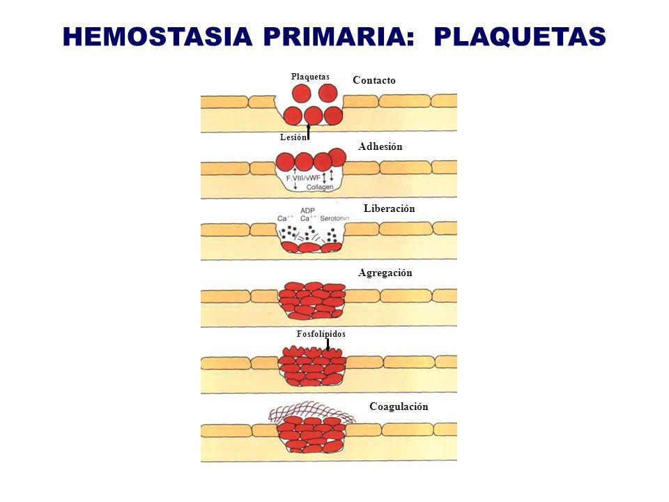 HEMOSTASIA PRIMARIA: PLAQUETAS Contacto Adhesión Plaquetas Lesión Liberación Agregación Fosfolípidos Coagulación