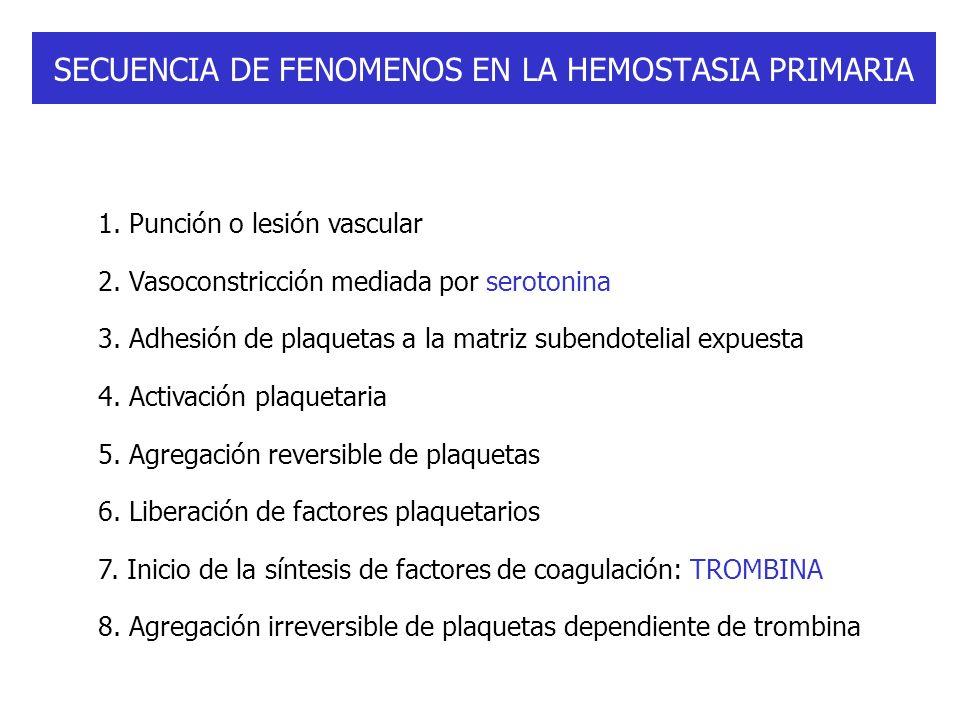 SECUENCIA DE FENOMENOS EN LA HEMOSTASIA PRIMARIA 1. Punción o lesión vascular 2. Vasoconstricción mediada por serotonina 3. Adhesión de plaquetas a la