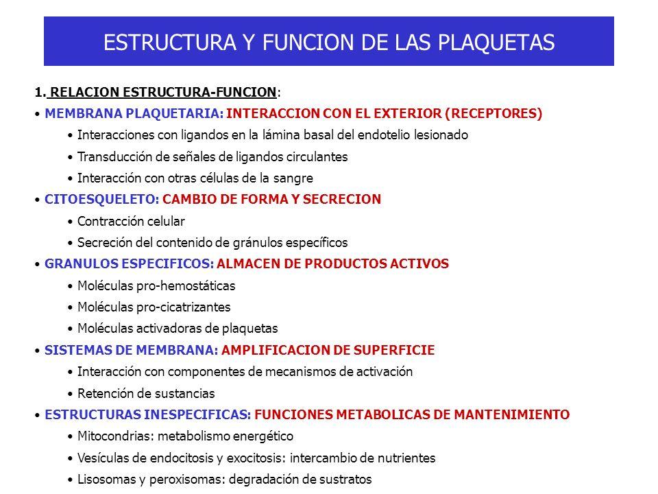 ESTRUCTURA Y FUNCION DE LAS PLAQUETAS 1. RELACION ESTRUCTURA-FUNCION: MEMBRANA PLAQUETARIA: INTERACCION CON EL EXTERIOR (RECEPTORES) Interacciones con
