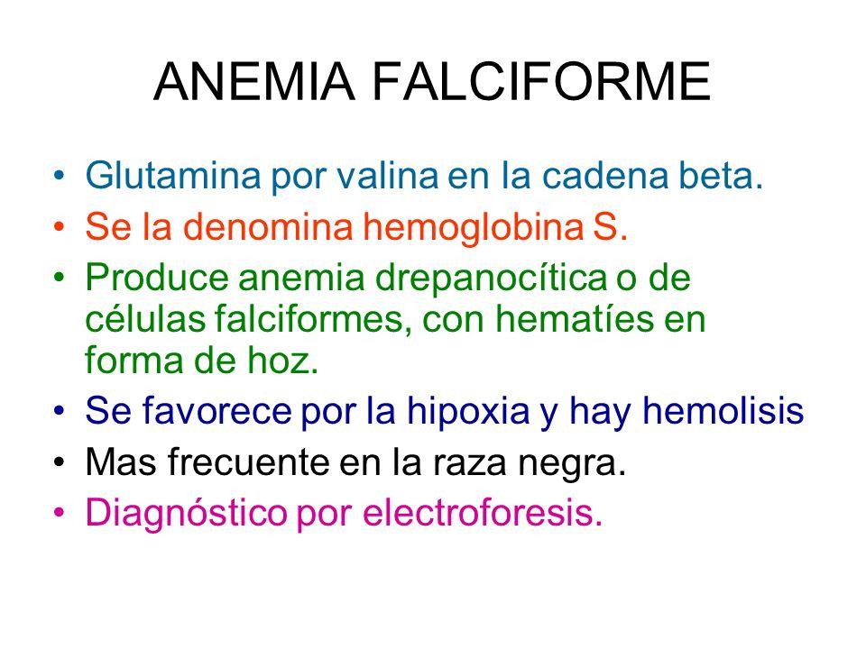 ANEMIA FALCIFORME Glutamina por valina en la cadena beta. Se la denomina hemoglobina S. Produce anemia drepanocítica o de células falciformes, con hem