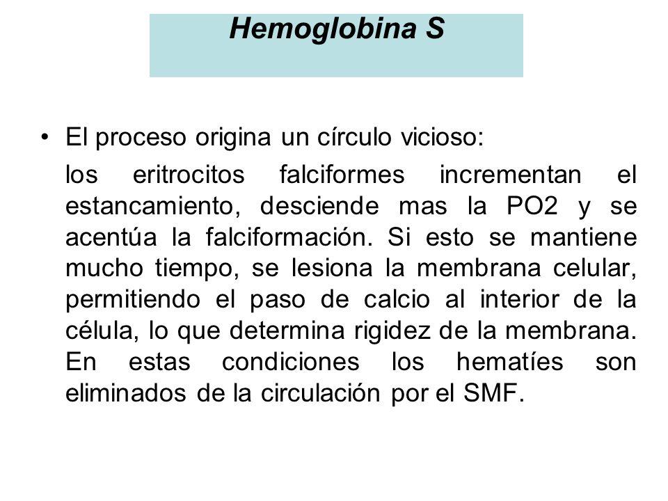 Hemoglobina S El proceso origina un círculo vicioso: los eritrocitos falciformes incrementan el estancamiento, desciende mas la PO2 y se acentúa la fa