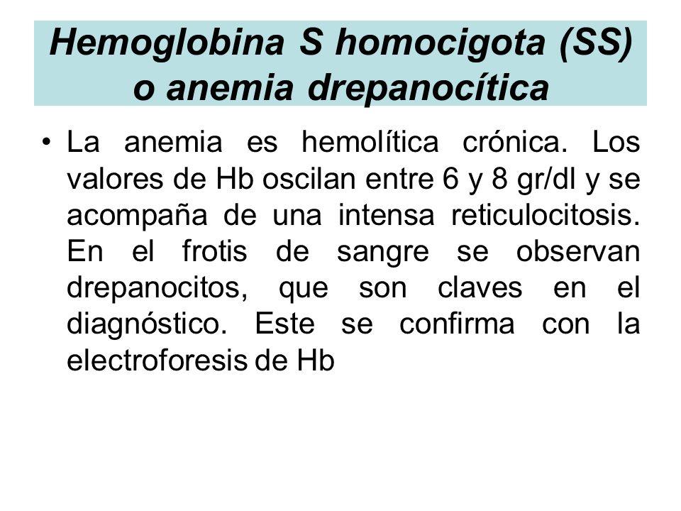 Hemoglobina S homocigota (SS) o anemia drepanocítica La anemia es hemolítica crónica. Los valores de Hb oscilan entre 6 y 8 gr/dl y se acompaña de una