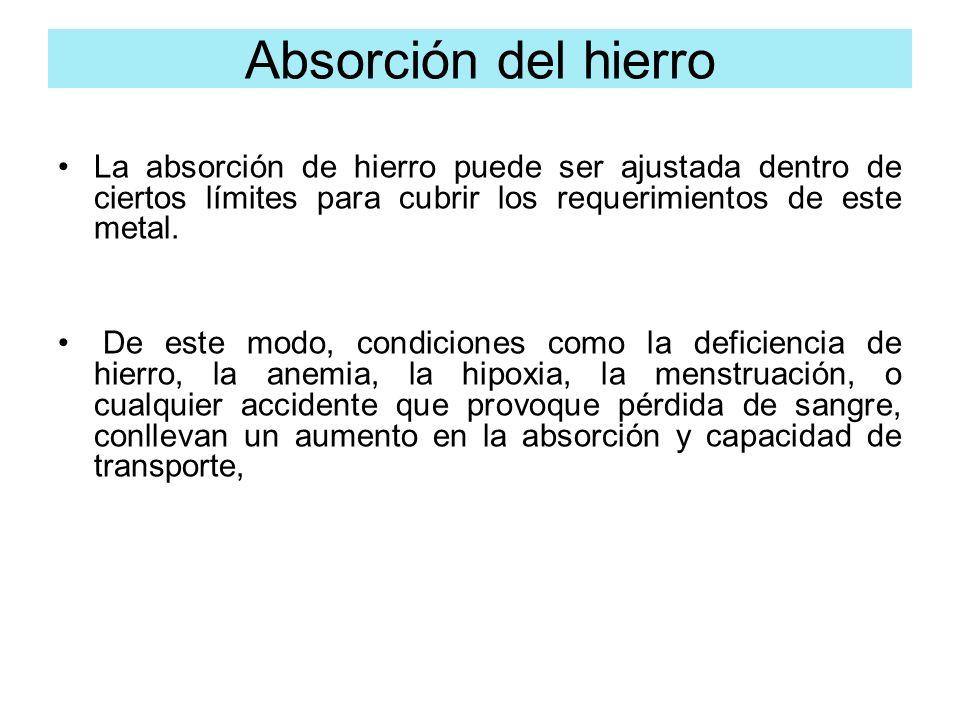 La absorción de hierro puede ser ajustada dentro de ciertos límites para cubrir los requerimientos de este metal. De este modo, condiciones como la de