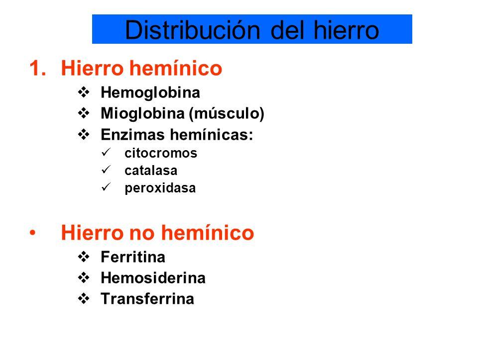 Distribución del hierro 1.Hierro hemínico Hemoglobina Mioglobina (músculo) Enzimas hemínicas: citocromos catalasa peroxidasa Hierro no hemínico Ferrit