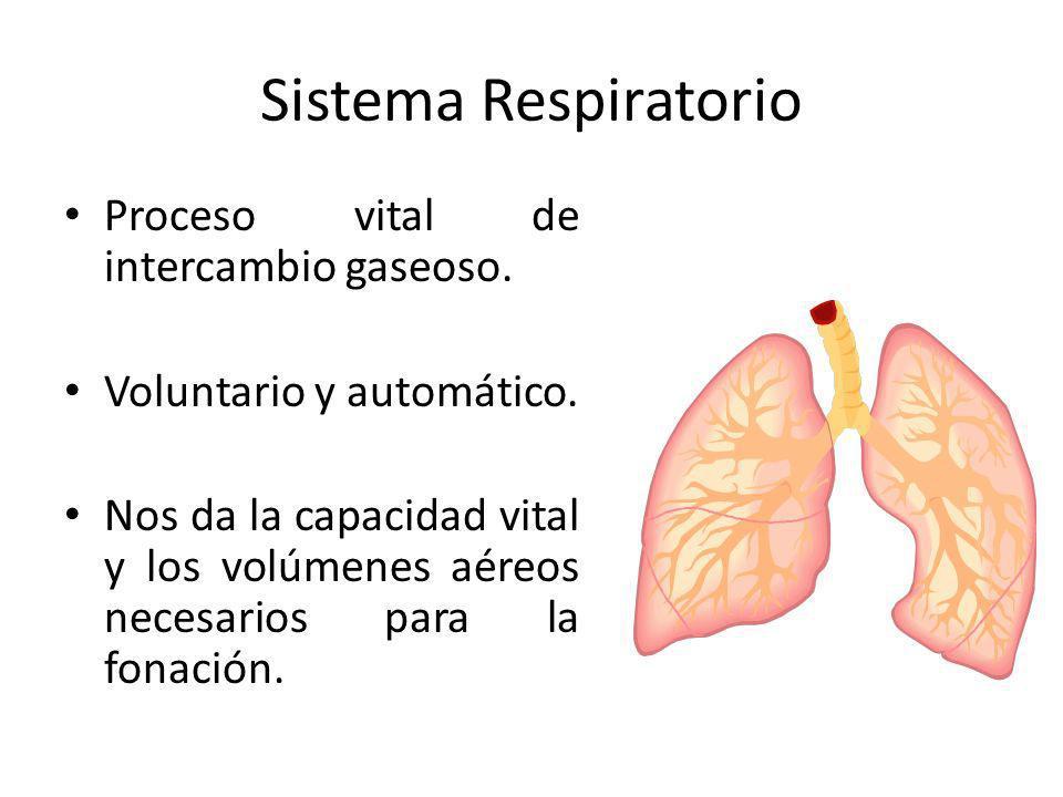 Sistema Respiratorio Proceso vital de intercambio gaseoso. Voluntario y automático. Nos da la capacidad vital y los volúmenes aéreos necesarios para l