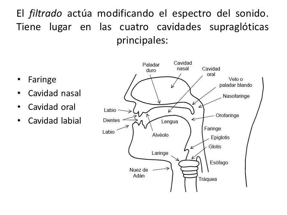 El filtrado actúa modificando el espectro del sonido. Tiene lugar en las cuatro cavidades supraglóticas principales: Faringe Cavidad nasal Cavidad ora