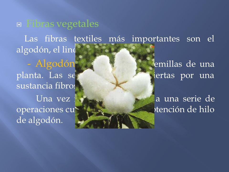 Fibras vegetales Las fibras textiles más importantes son el algodón, el lino y el esparto. - Algodón: se extrae de las semillas de una planta. Las sem