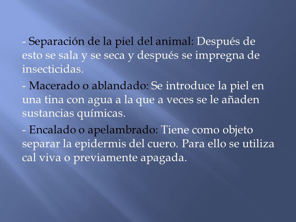 - Separación de la piel del animal: Después de esto se sala y se seca y después se impregna de insecticidas. - Macerado o ablandado: Se introduce la p