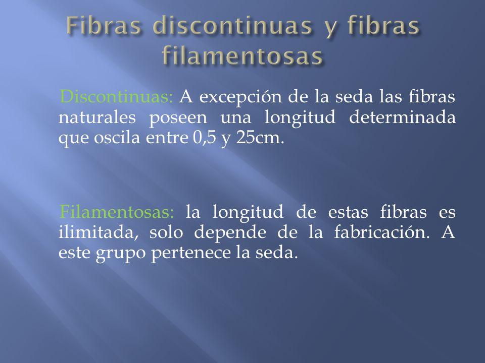 Discontinuas: A excepción de la seda las fibras naturales poseen una longitud determinada que oscila entre 0,5 y 25cm. Filamentosas: la longitud de es