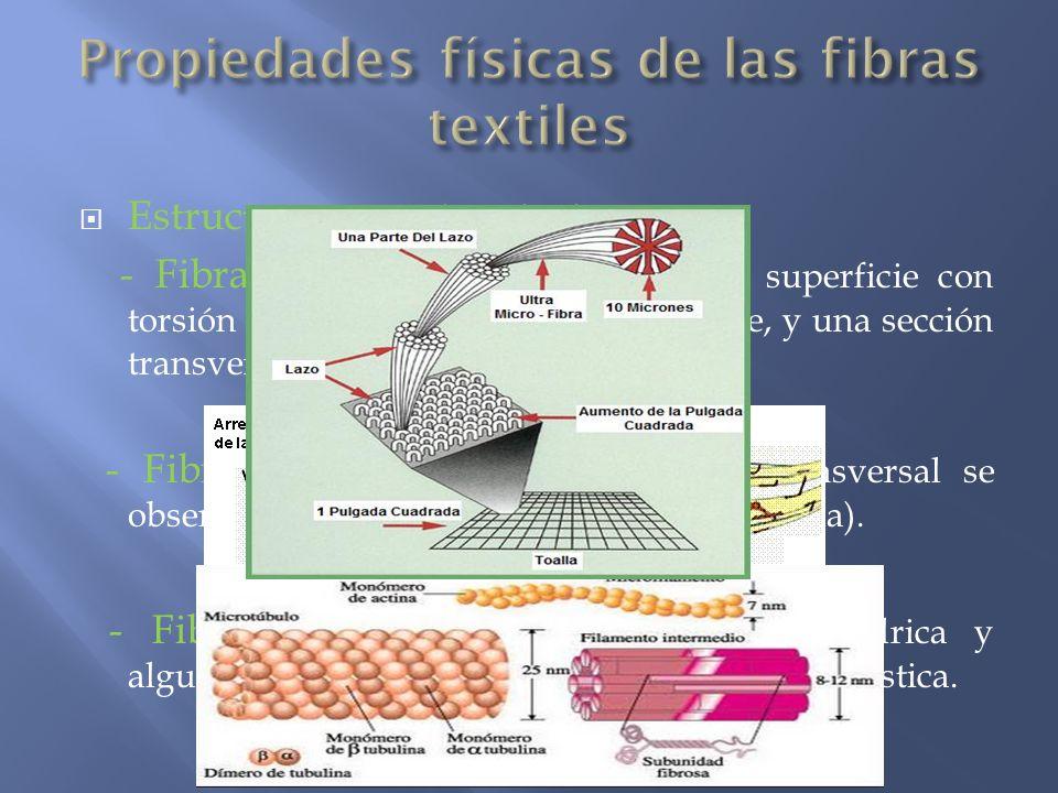 Estructura, aspecto y tacto - Fibras celulósicas: presentan una superficie con torsión al observarlas longitudinalmente, y una sección transversal de