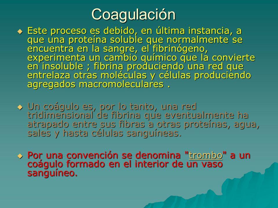 Gránulos plaquetarios.