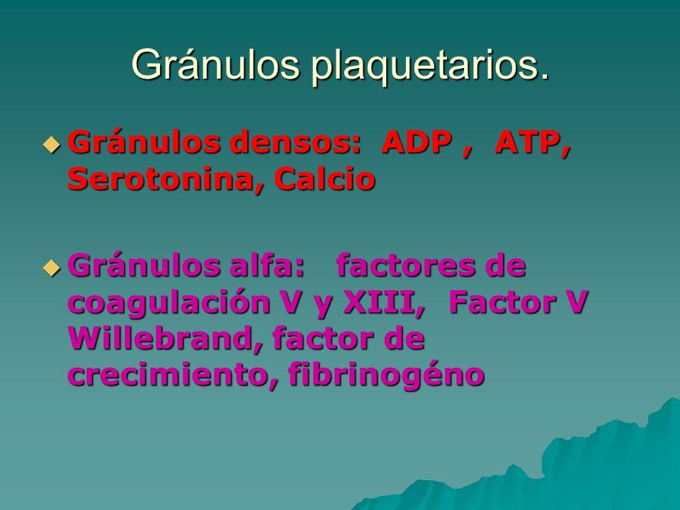 Gránulos plaquetarios. Gránulos densos: ADP, ATP, Serotonina, Calcio Gránulos densos: ADP, ATP, Serotonina, Calcio Gránulos alfa: factores de coagulac