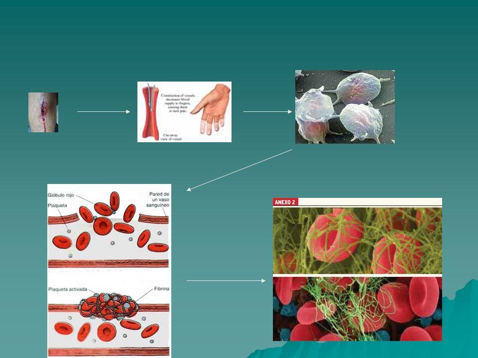 Coagulación Las células endoteliales usualmente inhiben la activación plaquetaria por la producción de monóxido de nitrógeno, ADP asa endotelial y Prostaglandina 2.