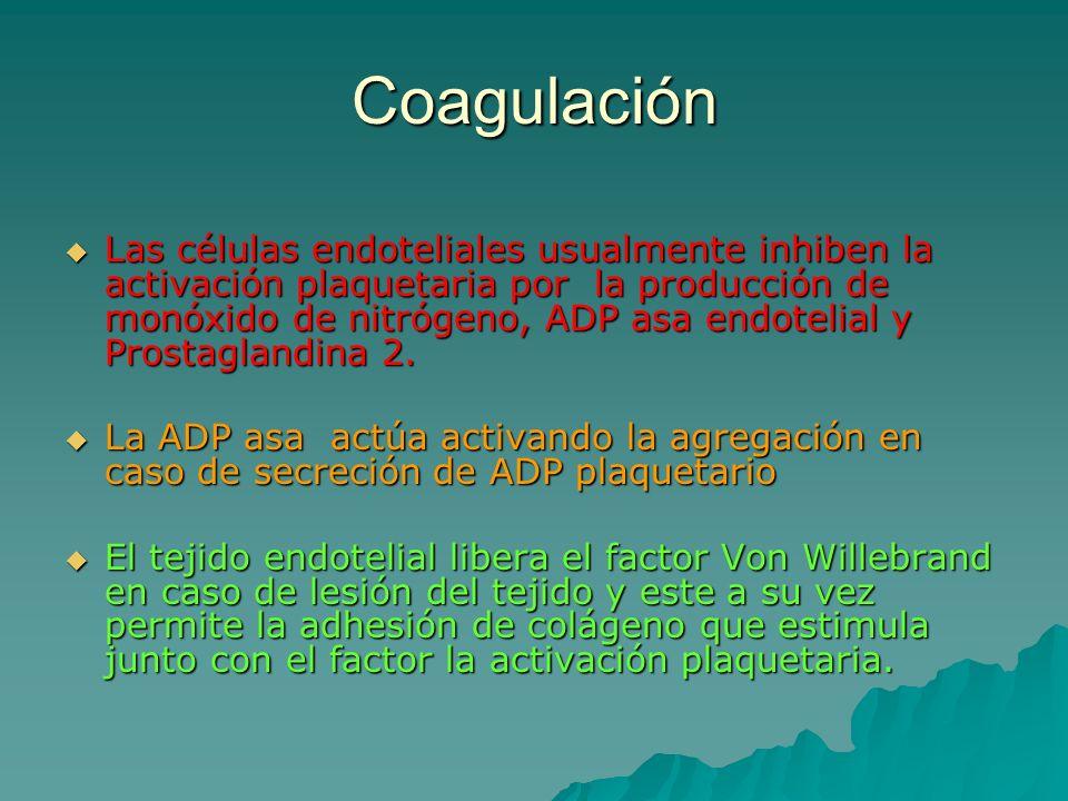 Coagulación Las células endoteliales usualmente inhiben la activación plaquetaria por la producción de monóxido de nitrógeno, ADP asa endotelial y Pro