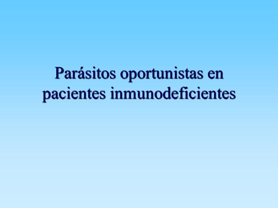 Parásitos oportunistas Concepto Concepto Parasitosis oportunistas Parasitosis oportunistas –Microsporidiosis –Coccidios Cryptosporidium Cyclospora CyclosporaIsospora –Otros
