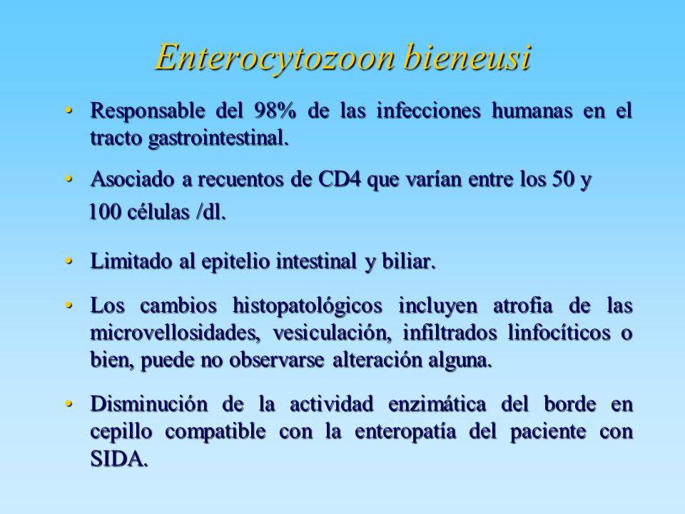 Enterocytozoon bieneusi Responsable del 98% de las infecciones humanas en el tracto gastrointestinal.Responsable del 98% de las infecciones humanas en