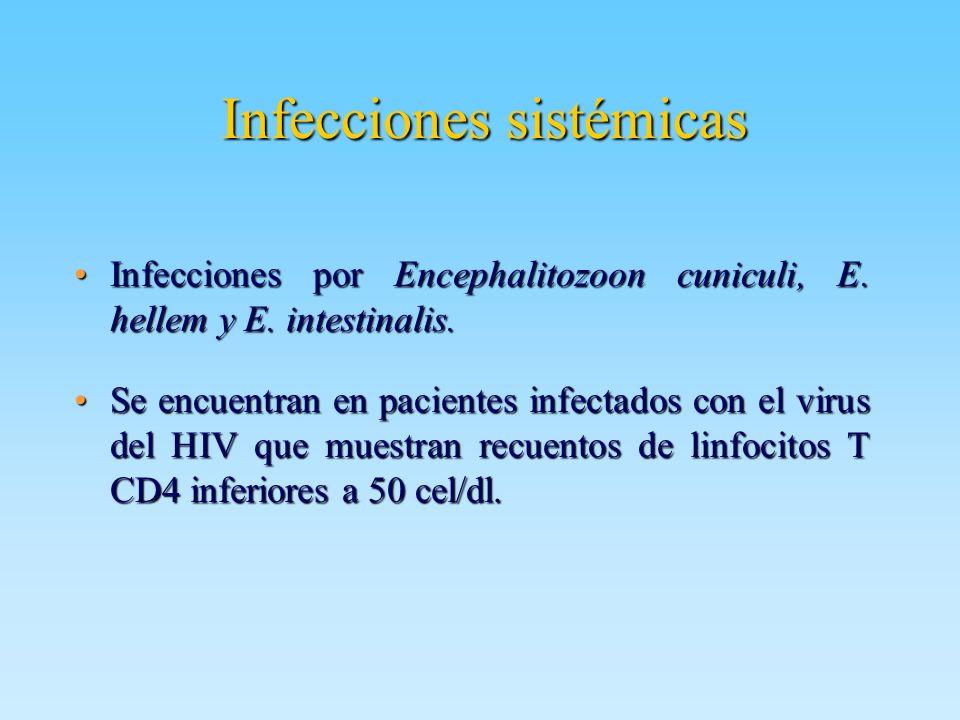 Infecciones sistémicas Infecciones por Encephalitozoon cuniculi, E. hellem y E. intestinalis.Infecciones por Encephalitozoon cuniculi, E. hellem y E.