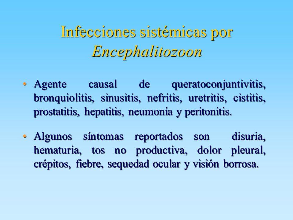 Infecciones sistémicas por Encephalitozoon Agente causal de queratoconjuntivitis, bronquiolitis, sinusitis, nefritis, uretritis, cistitis, prostatitis
