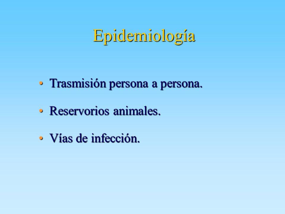 Epidemiología Trasmisión persona a persona.Trasmisión persona a persona. Reservorios animales.Reservorios animales. Vías de infección.Vías de infecció