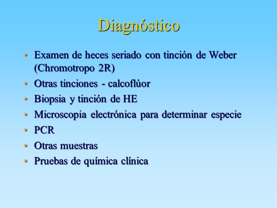 Diagnóstico Examen de heces seriado con tinción de Weber (Chromotropo 2R)Examen de heces seriado con tinción de Weber (Chromotropo 2R) Otras tinciones