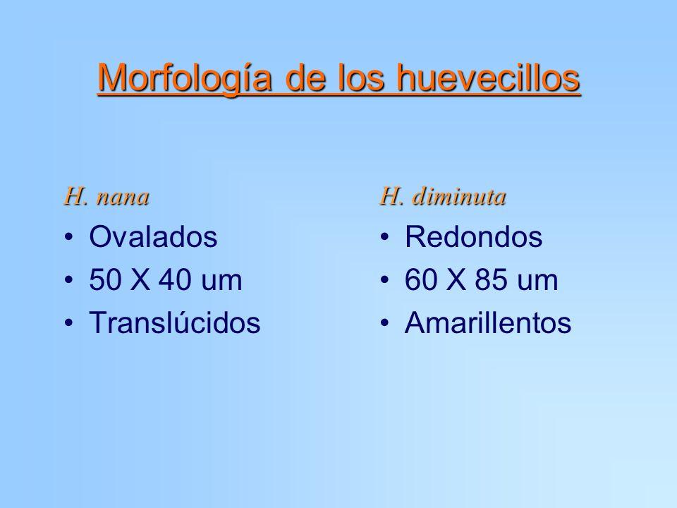 Morfología de los huevecillos H. nana Ovalados 50 X 40 um Translúcidos H. diminuta Redondos 60 X 85 um Amarillentos