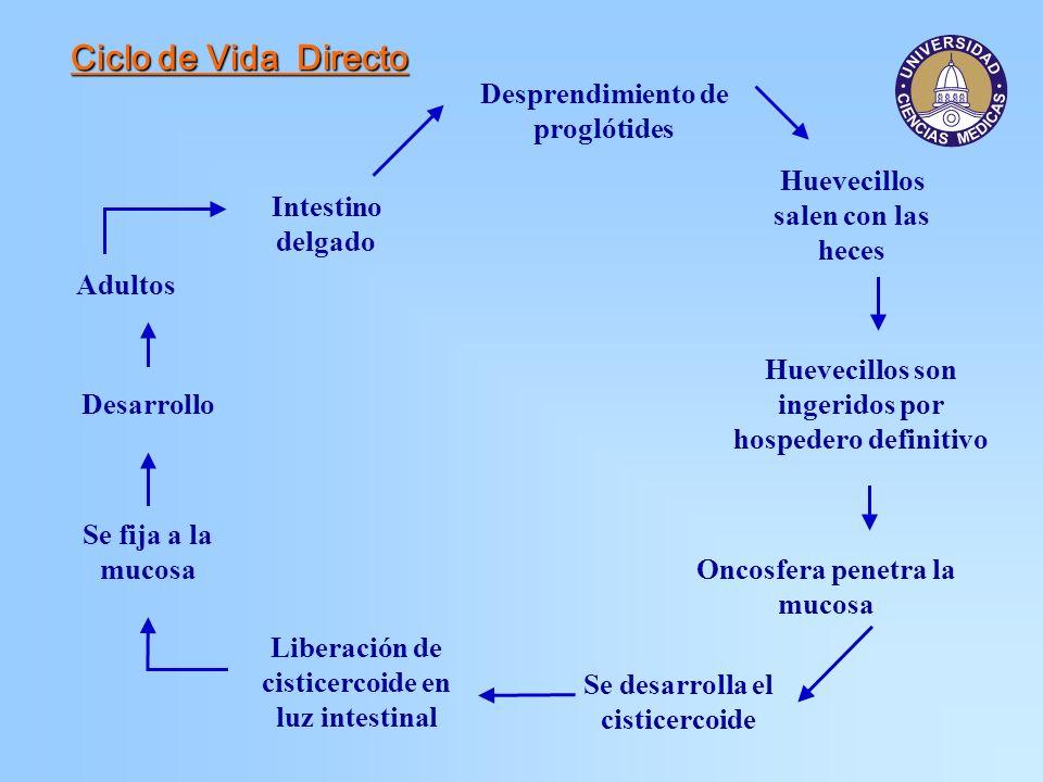 Epidemiología H.