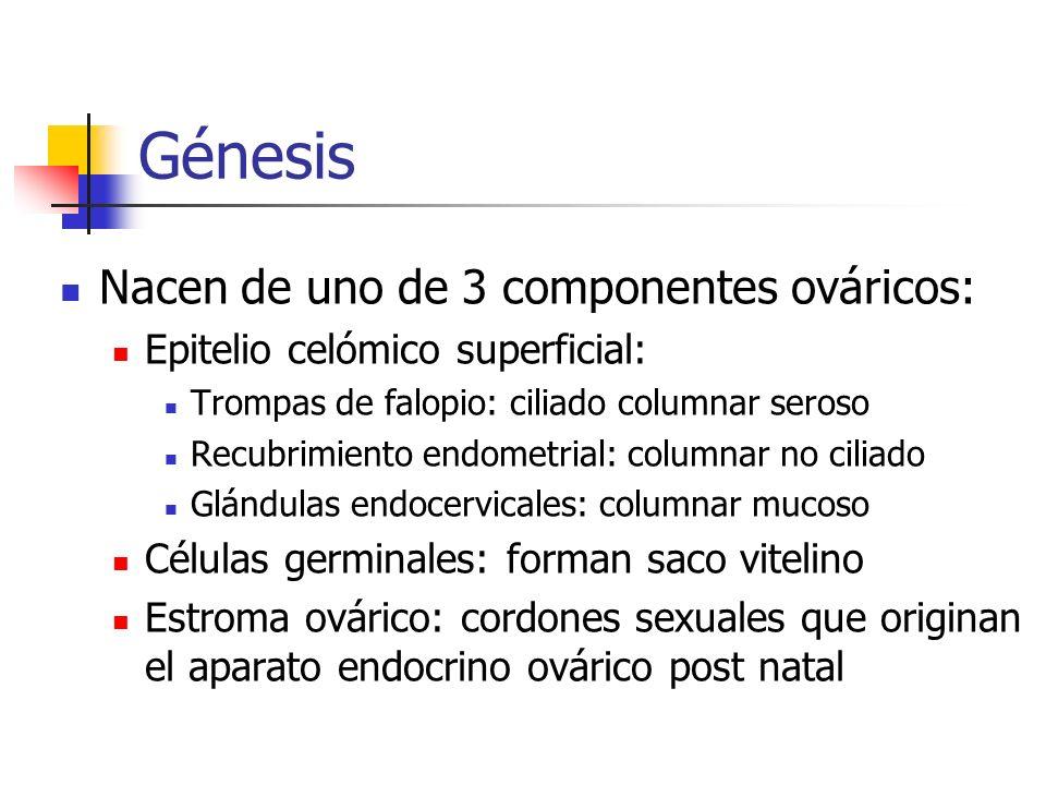 Génesis Nacen de uno de 3 componentes ováricos: Epitelio celómico superficial: Trompas de falopio: ciliado columnar seroso Recubrimiento endometrial: