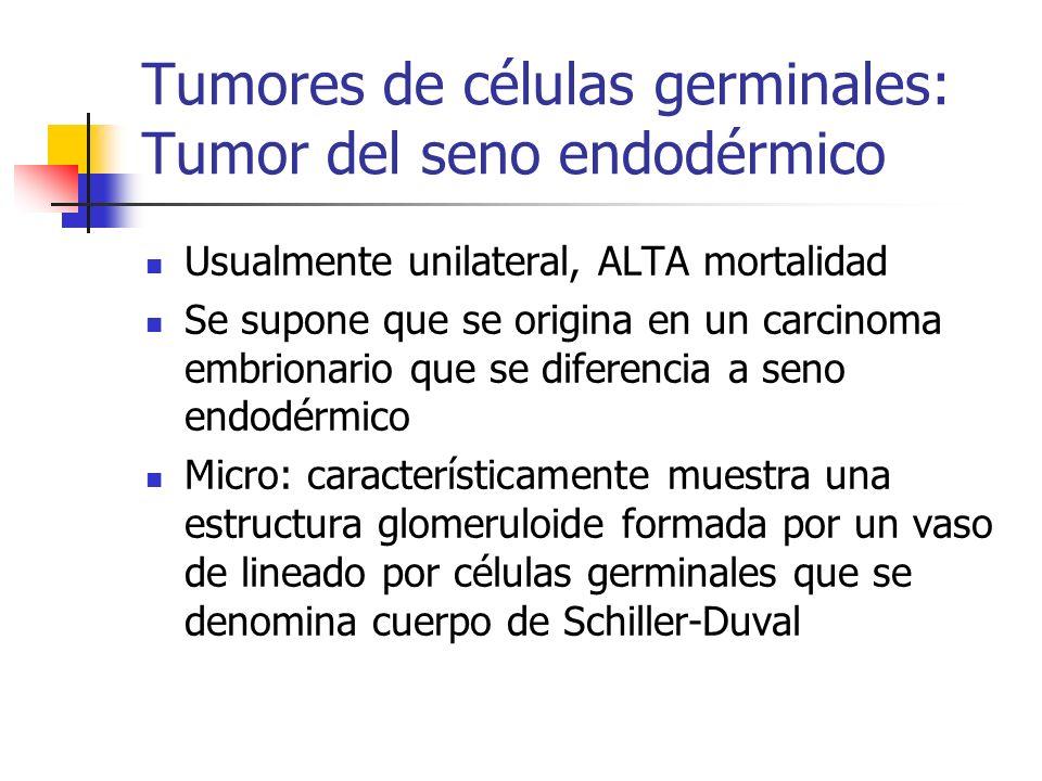 Tumores de células germinales: Tumor del seno endodérmico Usualmente unilateral, ALTA mortalidad Se supone que se origina en un carcinoma embrionario