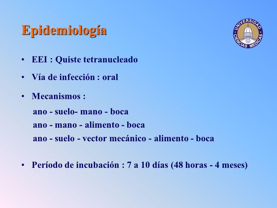 Epidemiología EEI : Quiste tetranucleado Vía de infección : oral Mecanismos : ano - suelo- mano - boca ano - mano - alimento - boca ano - suelo - vect