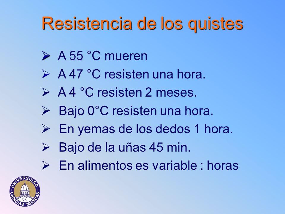Resistencia de los quistes A 55 °C mueren Ø A 47 °C resisten una hora. Ø A 4 °C resisten 2 meses. Ø Bajo 0°C resisten una hora. Ø En yemas de los dedo