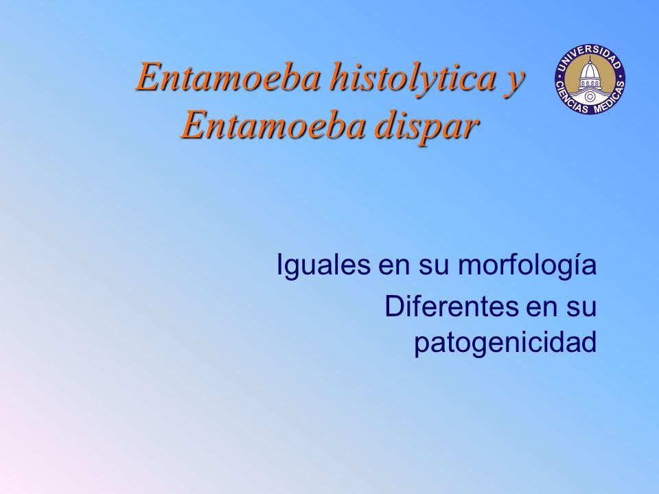 Entamoeba histolytica y Entamoeba dispar Iguales en su morfología Diferentes en su patogenicidad