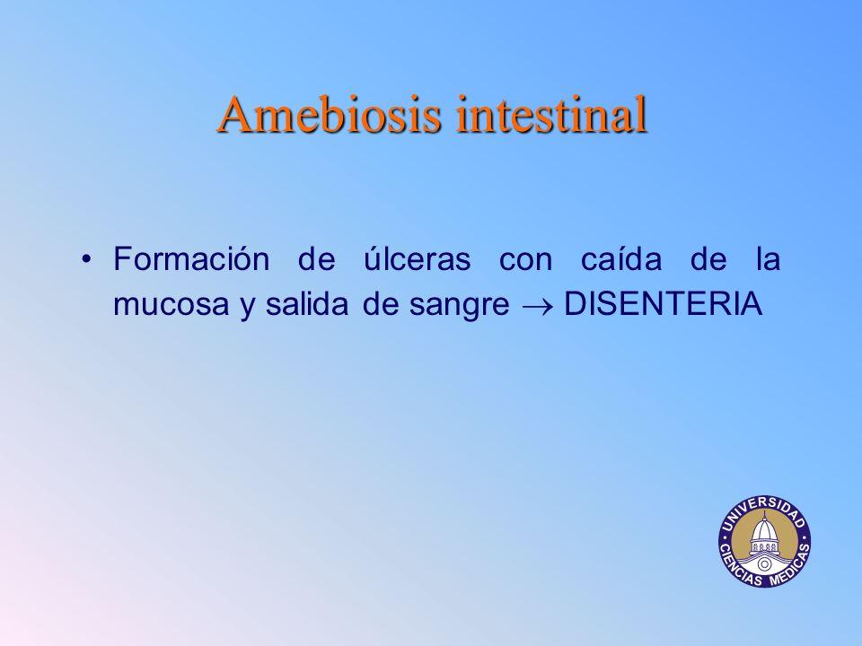 Amebiosisintestinal Amebiosis intestinal Formación de úlceras con caída de la mucosa y salida de sangre DISENTERIA