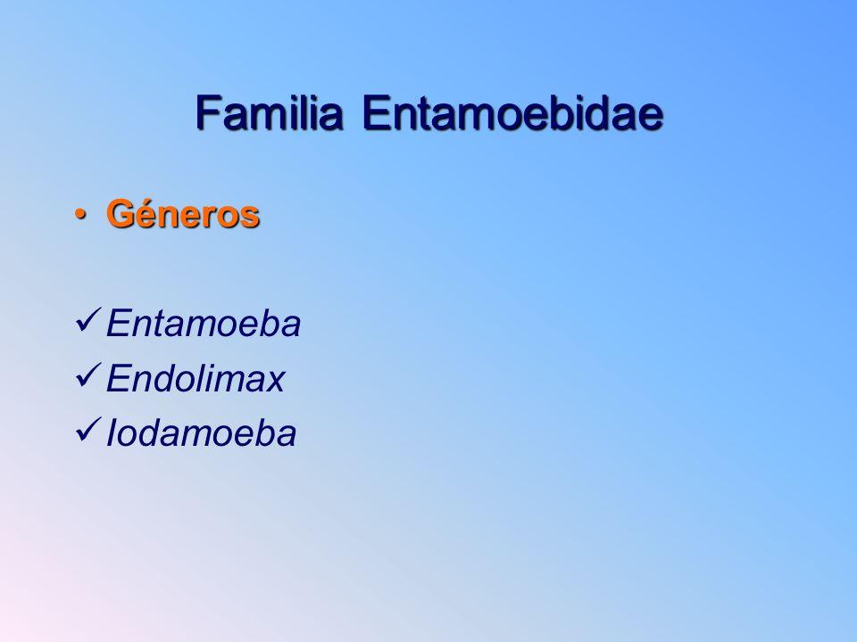 Familia Entamoebidae GénerosGéneros Entamoeba Endolimax Iodamoeba