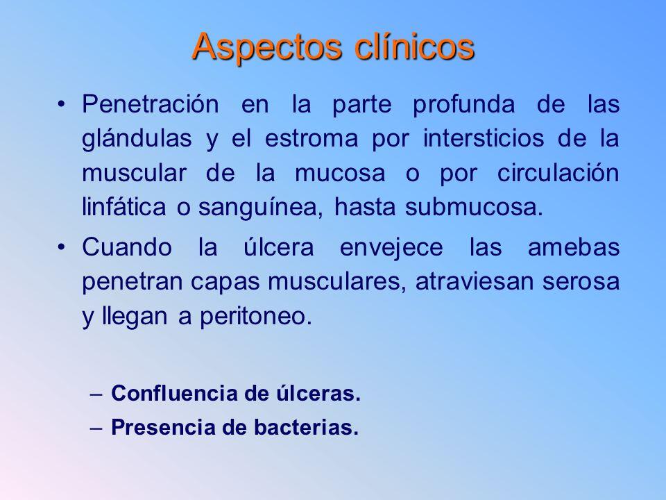Aspectos clínicos Penetración en la parte profunda de las glándulas y el estroma por intersticios de la muscular de la mucosa o por circulación linfát